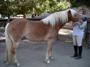 A girl and her pony: Ellie as a plump 3 yr old, just out of pasture. Already snuggly, though!