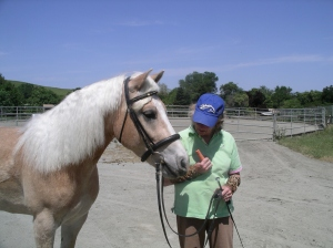 A friend or trainer can help you evaluate the horse