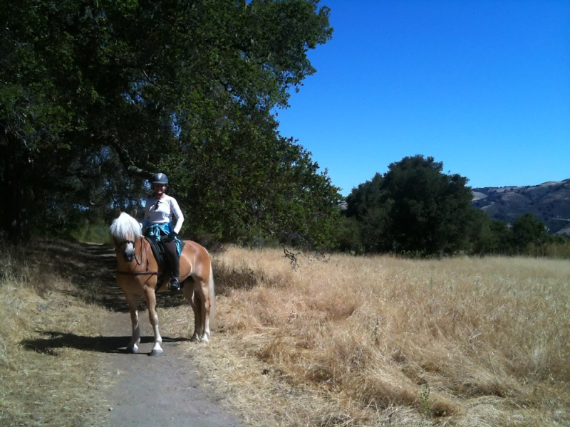 On the trail with a haflinger  - in a treeless saddle, of course.