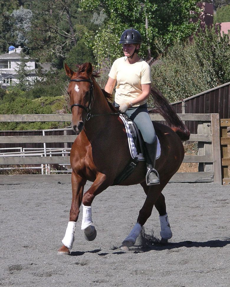Ideally, your saddle should give you the support you want without hindering or constricting you. And it should not hurt either you or the horse! This is harder to achieve than you would think.