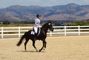 Awkwardly attempting a canter pirouette during warmup at a recent show