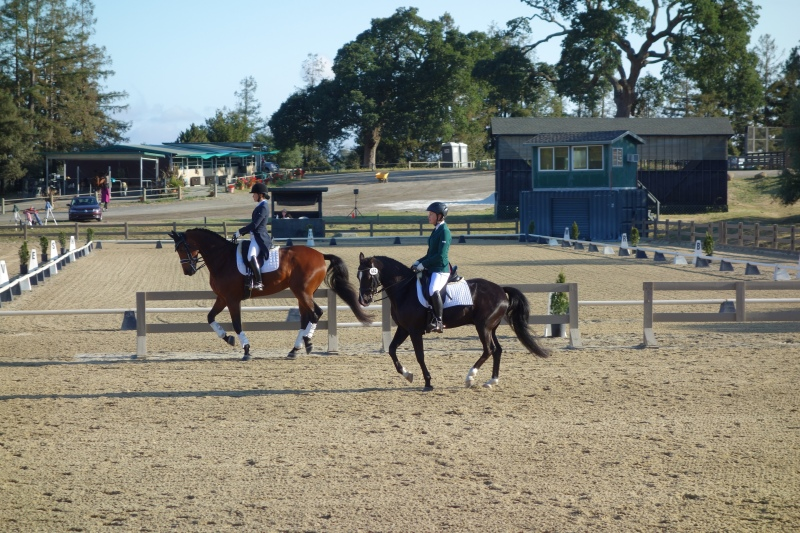 Keeping up with the big horses in the warm up ring